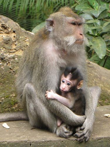 baby monkey, baby monkey...