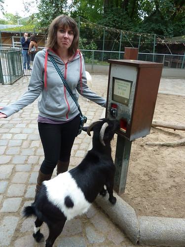 Goat at Berlin Zoo