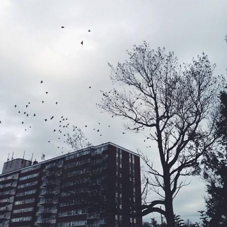 The Birds #VSCOcam