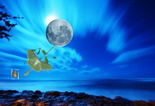 Blue Luna by Carmen CS