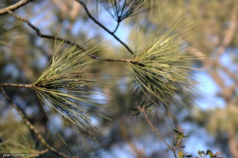 torrey_pines_closeup_web