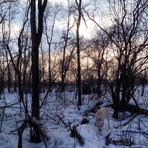 Daisy at dusk