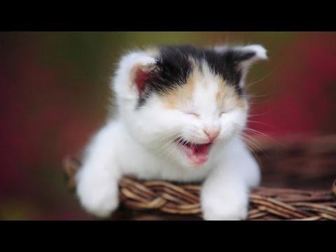 Ultimate cat vines compilation - Best cat vines 2014 / 2015