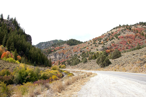 Logan Canyon 5
