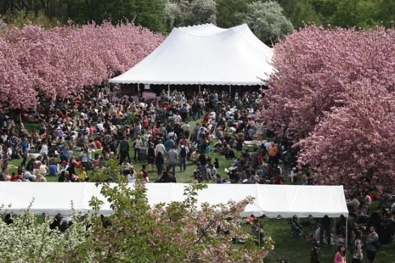 Brooklyn Botanical Garden Sakura Matsuri