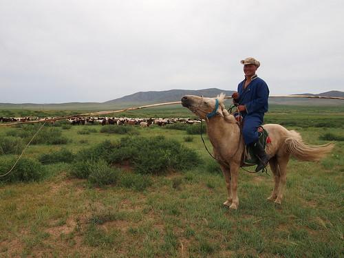 Mongolian cowboy near Gurvanbutag