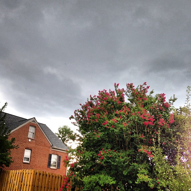 Storm brewing. #locustavenue #crapemyrtle
