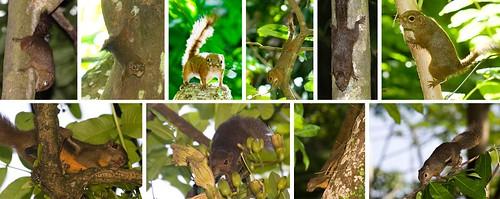 Flickr Search: squirrel