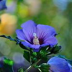 A flower in Olive's Garden