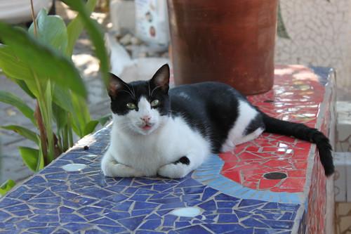 20131020_8580_Kas-cat copy