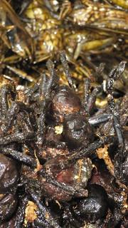 gruesome spider snacks (Cambodia)