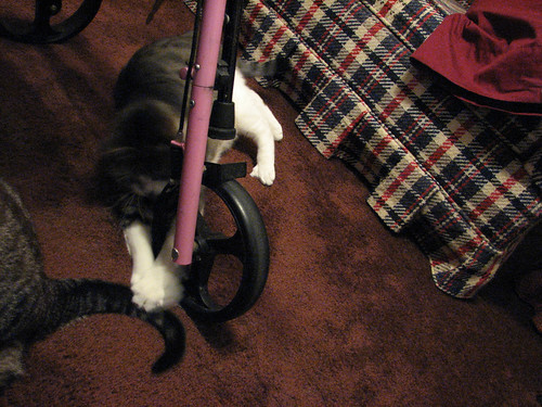 kitty grabs zoe tail