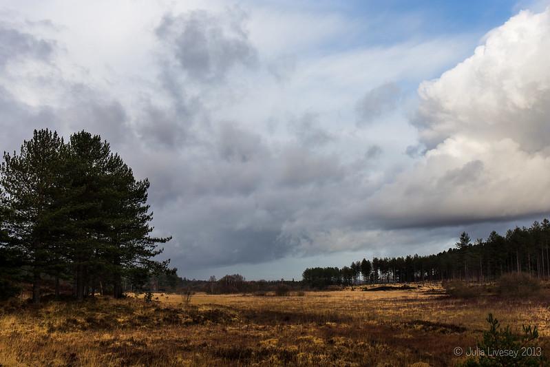 View towards Morden Bog