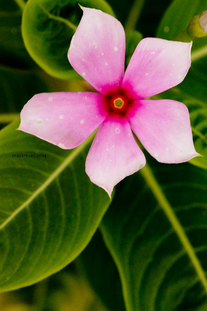 pink flower that survived in 3D