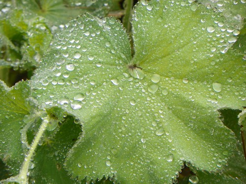rainy9