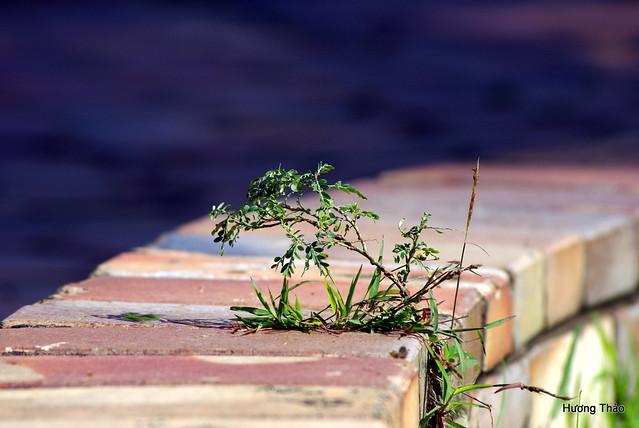 Nature Bonsai