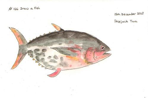 EDM #166 Draw a Fish