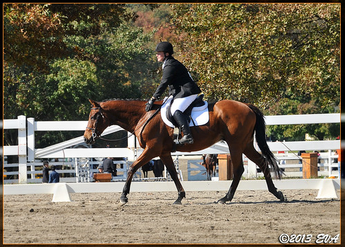 "Wizard gets a pat after our dressage test at the Second Call ""Fall for Horses"" Charity Show at the Horse Park of NJ"