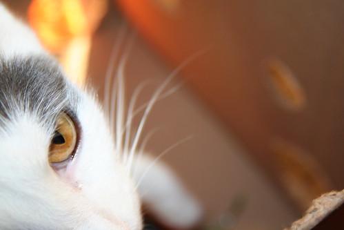 55/365 - Cat's Eye