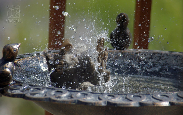 Robins Bath 06