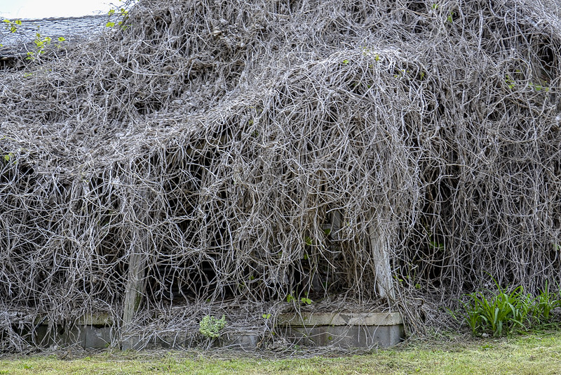 wabi sabi overgrown