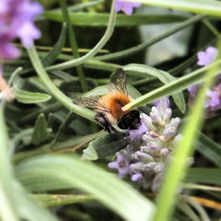 #bees