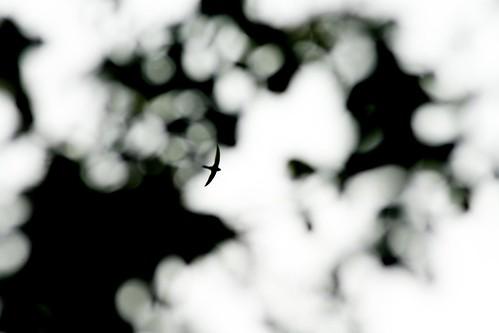 Vole au dessus des arbres by esquimo_2ooo
