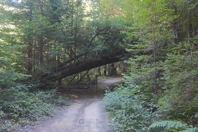 naturist 0007 Big Basin Redwoods, CA, USA