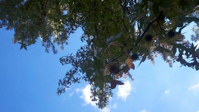 Sunny September Day