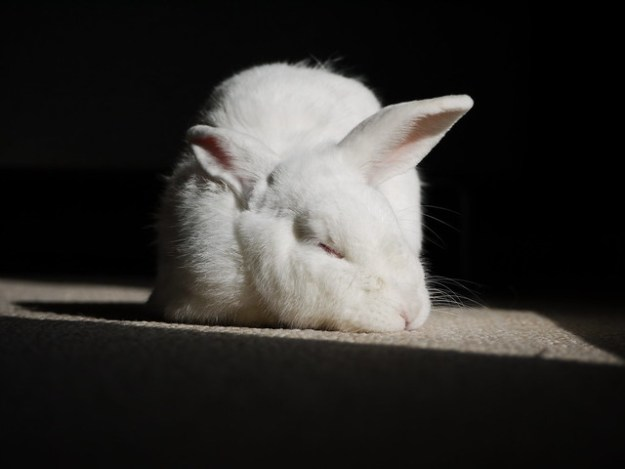 gus sleeping in the sun