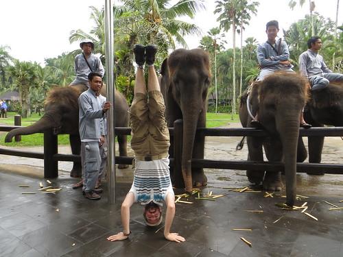 67. elephant safari park headstand