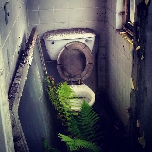 #fern #toilet