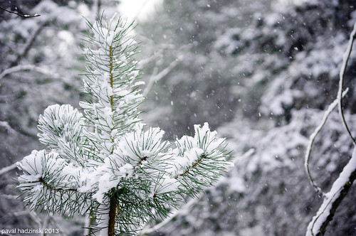 Advent | 9. Winter wonderland