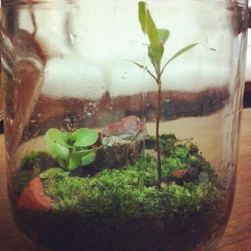 "Rescue #terrarium no 6 ""Queenstown"" 1/3"