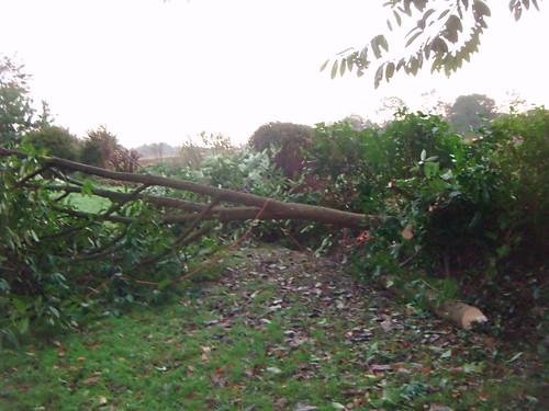 Premier arbre abattu par Guenal