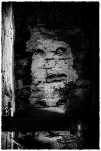 Face In The Woodpile by Davidap2009