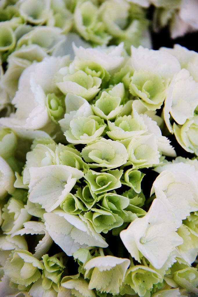 Imagen gratis de flores blancas y verdes