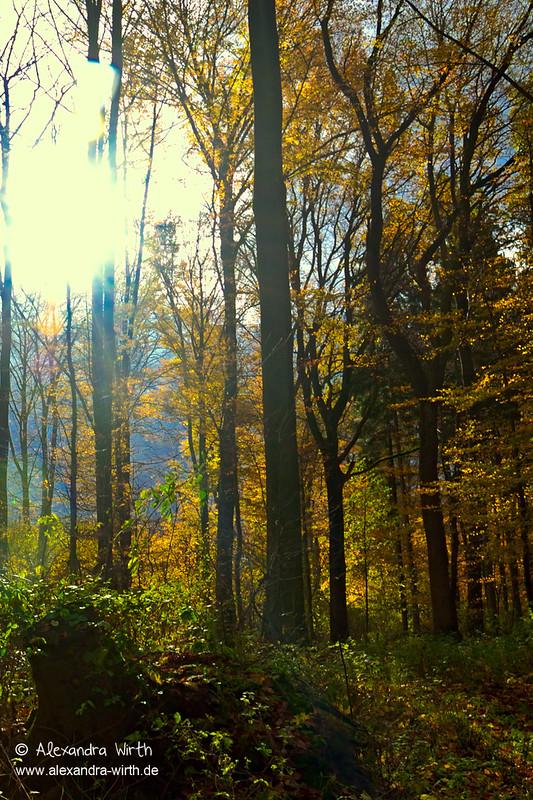 Herbstsonne by Alexandra Wirth