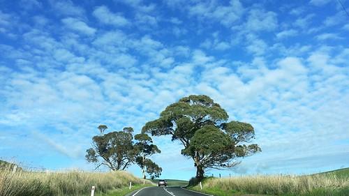 Two Trees on Horizon