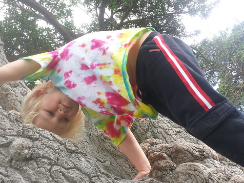 Owen climbing a tree, Central Park, Fremont