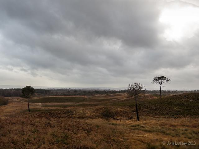 A grey day on Upton Heath