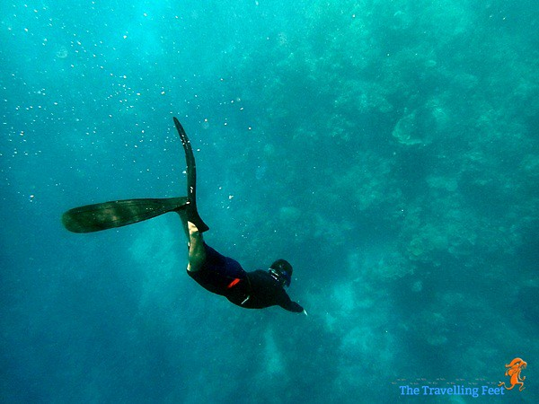 freediving at Terra Manna reef