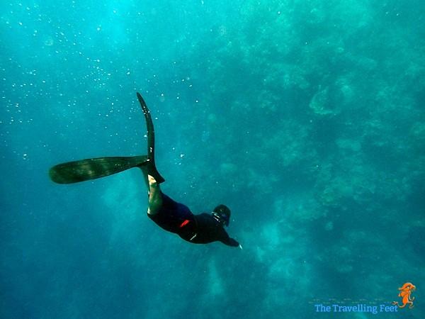 freediving at Terra Manna reef