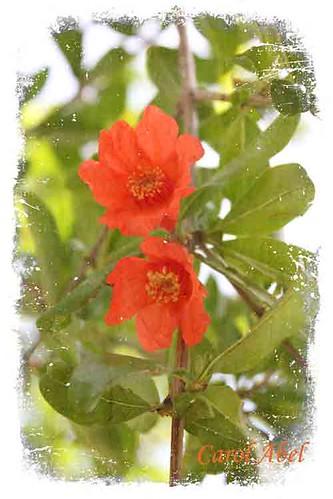 kk-tt-freeneasy-pomegranate-w