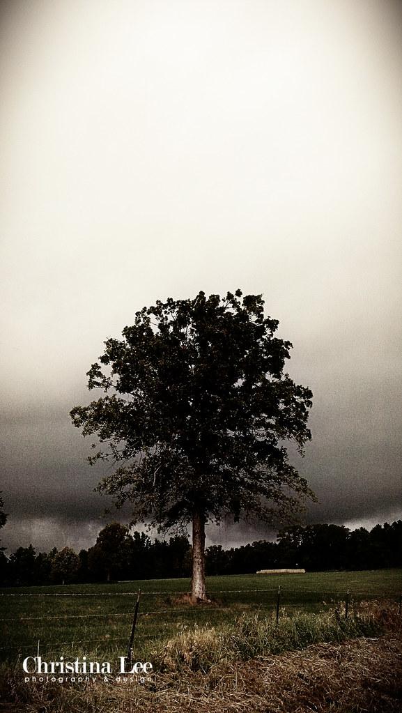 etex tree-2WEB