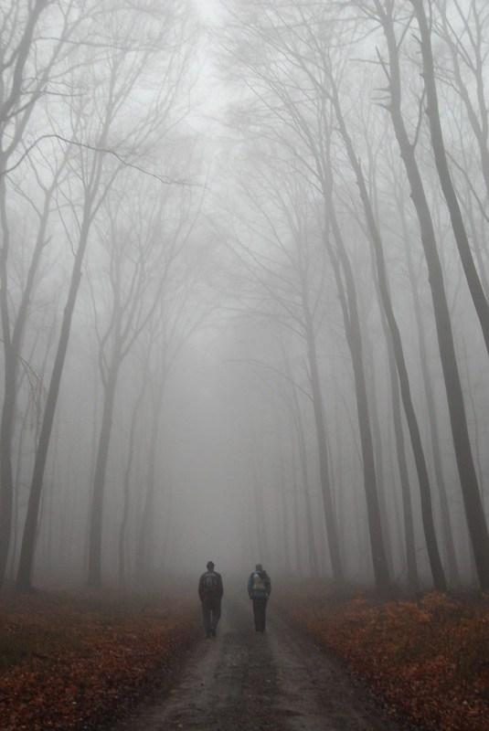 foggy hike 2