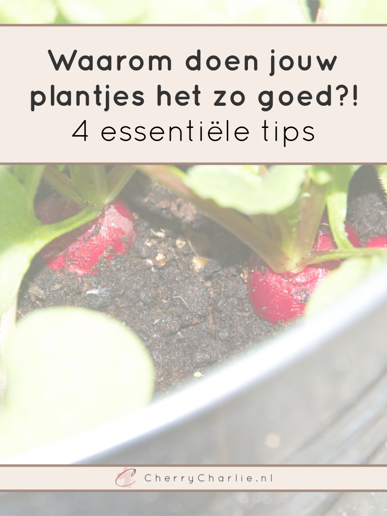 4 essentiële tips voor de beginnende tuinier - de rest gaat vanzelf! • CherryCharlie.nl
