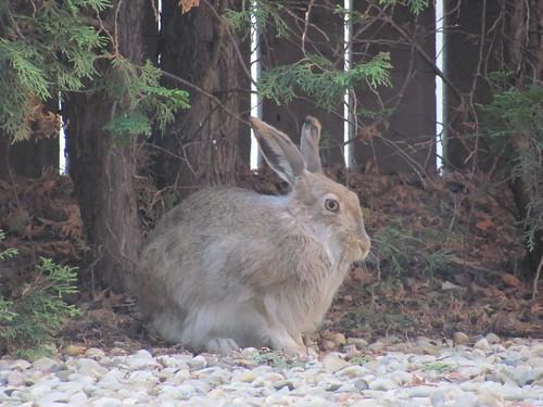 bunny may 7