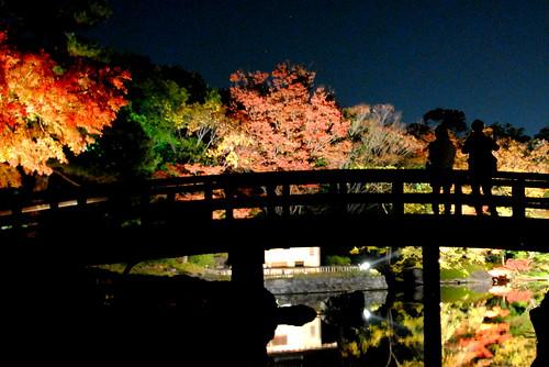 Shirotori Fall Lightup 059r