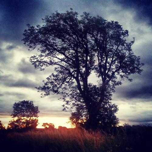 Dawn tree 4